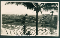 bali rice fields 1935 photo